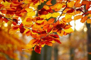 foliage-578662_1280