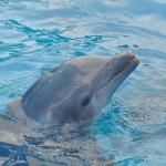 dolphin-989658_1280